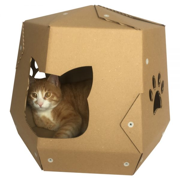Mars One Cardboard Cat House with cat3