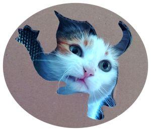 my angry cat shusha