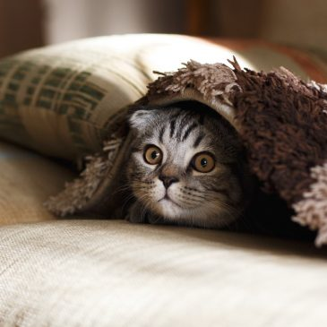 Why Is A Cat The Purrfect Choice for a First Pet?